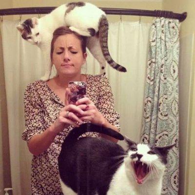 Я конечно люблю котиков, но иногда они реально как заноза в заднице