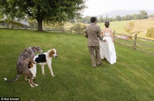 Свадебные фото, которые не войдут в альбом