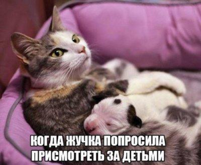 Подборка: приколы с животными