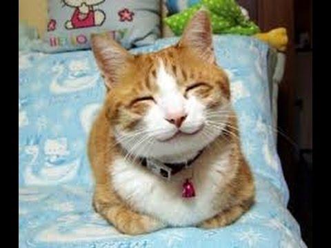 Невероятно веселые и любознательные коты))