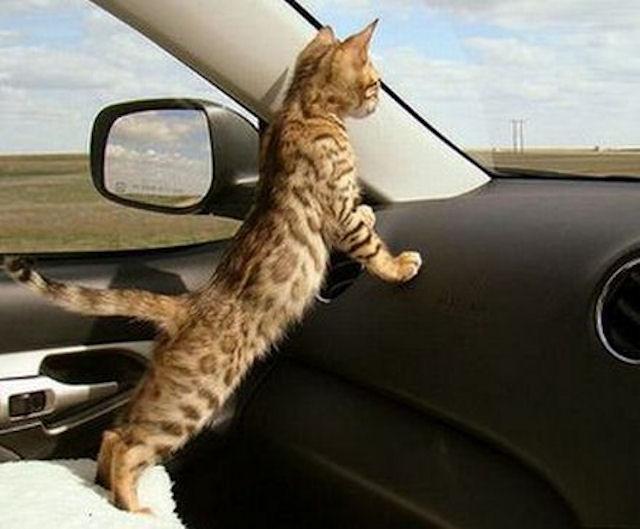 Кот всегда домой дорогу найдет.