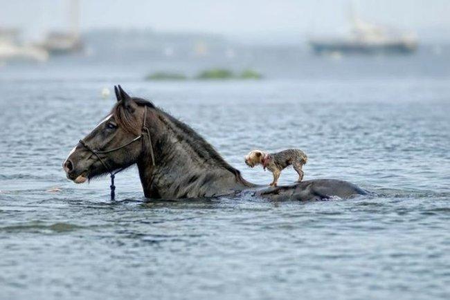 О дружбе и взаимопомощи в мире животных. Трогательное видео.