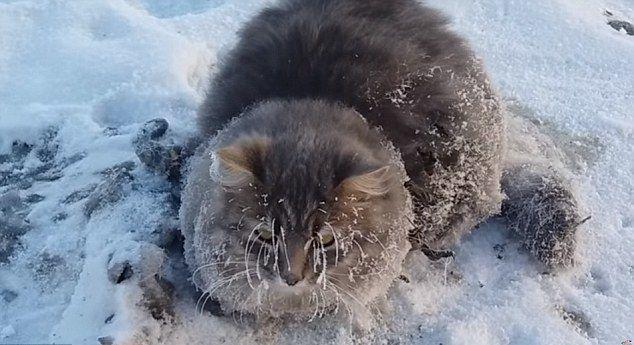 Спасение кота из замершей лужи.