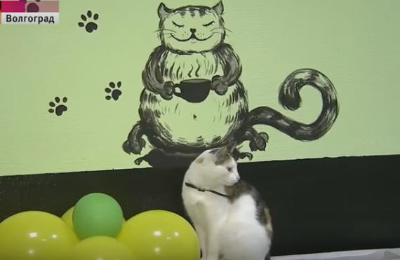 В Волгограде открылось кафе, где коты помогают людям снять стресс.