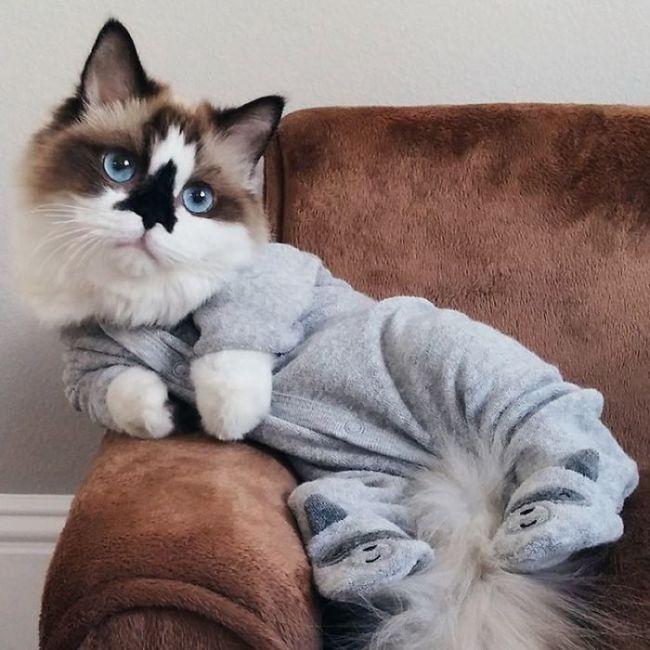 Кот Альберт - новая звезда интернета.