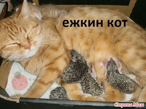 Это ФУРОР. Коты сидят в очереди на поиграть.