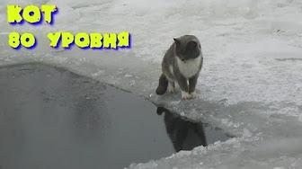 Кот рыбак 80 уровня.