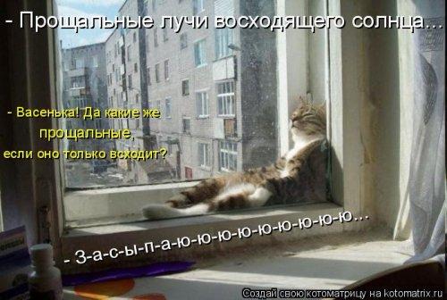 Новая котоматрица (31.01.17)