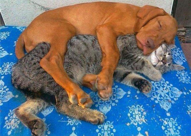 Как кошка с собакой живут хорошо.