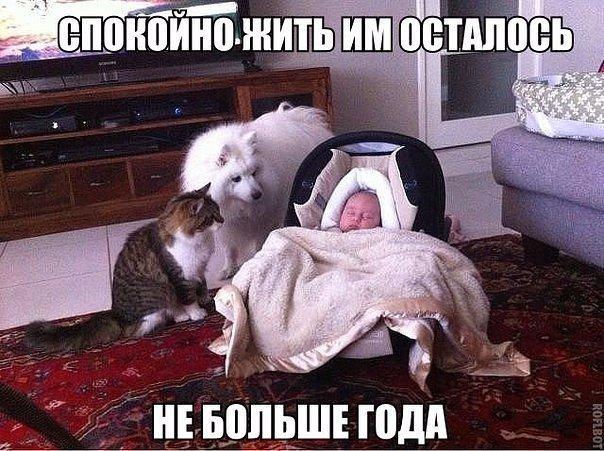 Жена наказала сына, сидит дуется... Анекдоты.