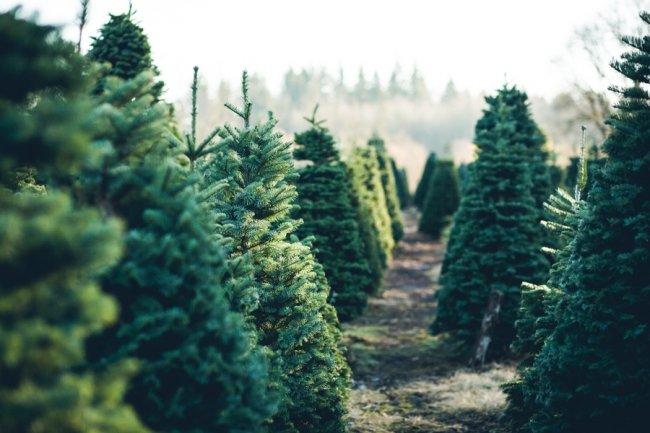 На праздник к нам пришла: российские елки, которые нас удивили