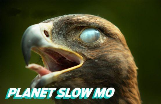 Зрелищное видео: полёт птиц в замедленной съемке