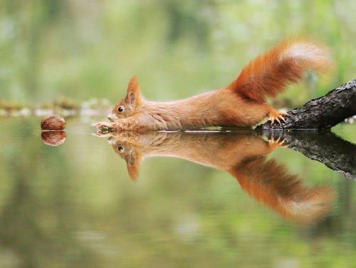 Смешные фотографии из мира грызунов фотографа из Австралии.