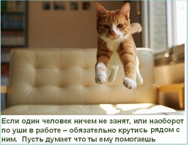 Жизненные правила котов