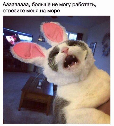 Котэподборка