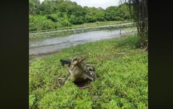 Схватку рыбака и крокодила за улов сняли на видео