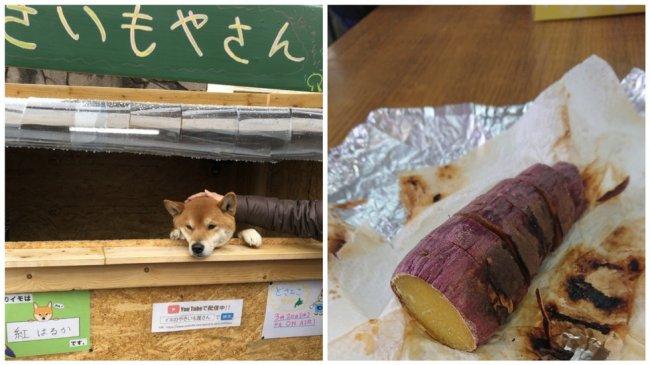 Пёс работает в уличном ларьке, и у него с радостью покупают запечённую картошку