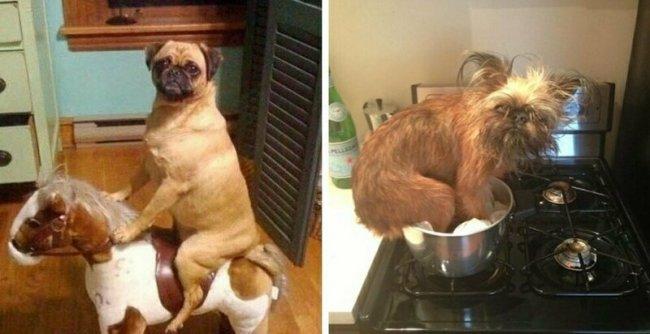 Что делают собаки, когда вас нет дома