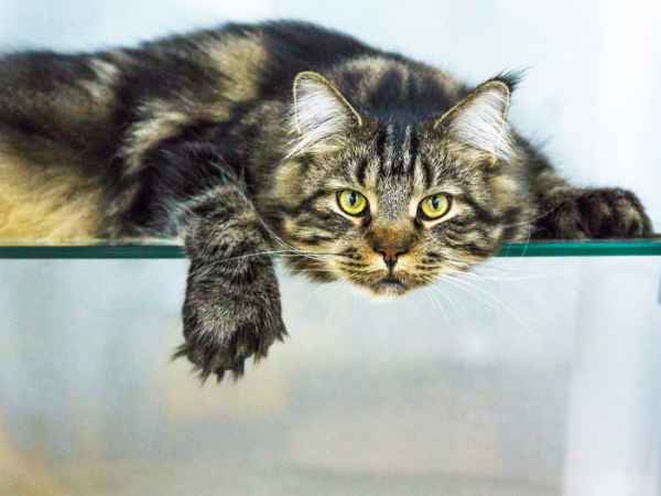 Бесстрашный кот «побил» бультерьера и его хозяина