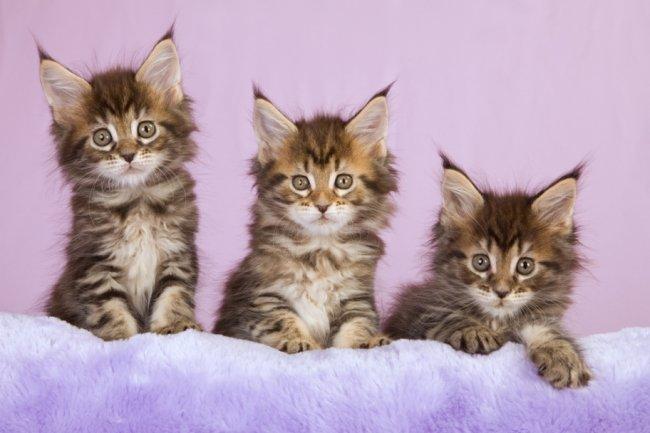 Челябинские аналитики посчитали стоимость квартир в котятах