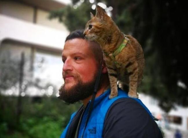 Кошка-путешественница вызвала восторг у пользователей Сети