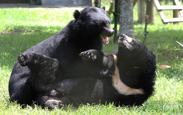 В США во дворе дома подрались два огромных медведя