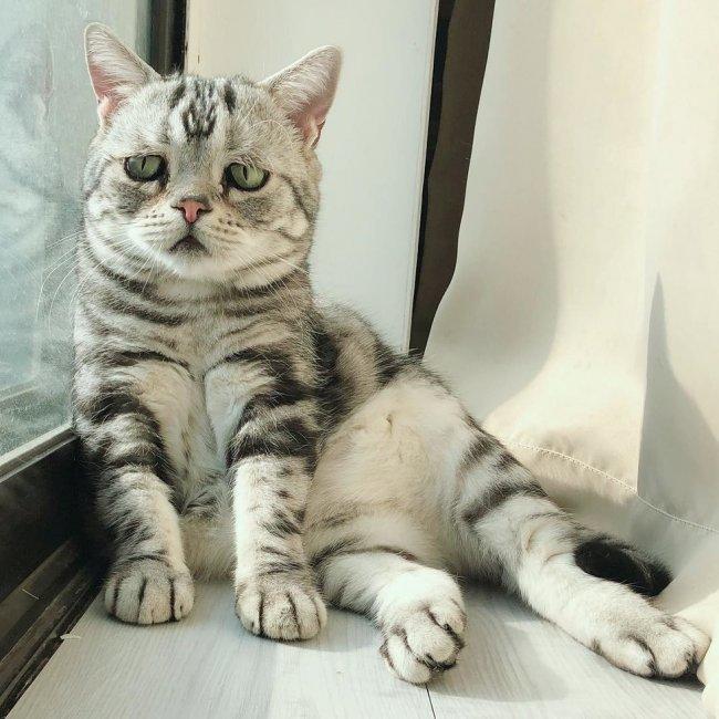 Grumpy cat больше нет, но дело её живет: 6 угрюмых котиков, пришедших на замену